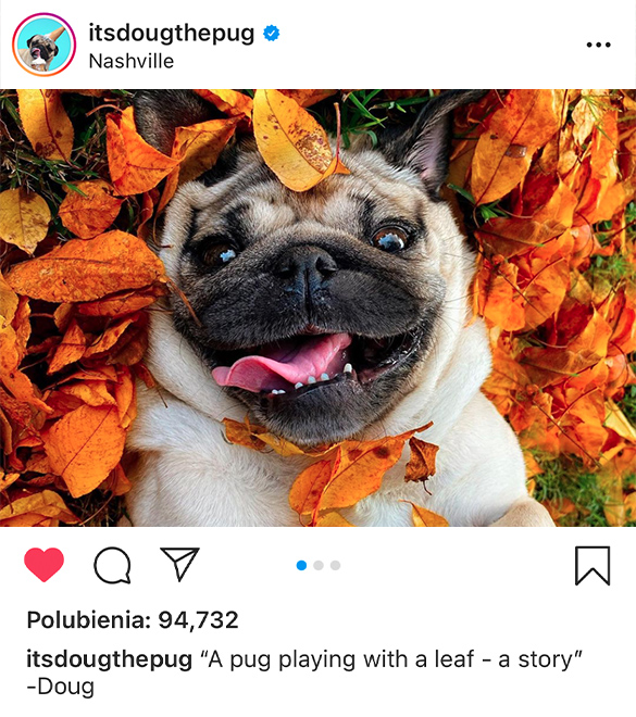 kup instagram likes - wypromowani.pl
